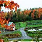 Cite Ecologique of New Hampshire