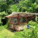 At This Hawaiian Eco-Community, You Can Stay In A Bamboo Hut In A Volcanic Crater