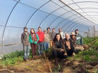 Living Roots EcoVillage 2017 Farming and Healing Arts Apprenticeships and Farm Leadership Positions