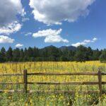 Flagstaff Cohousing