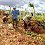 Building swale garden