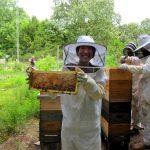 bees frame
